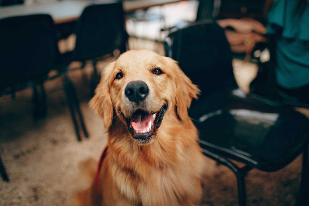 mhw magazin fahrradfahren mit hund dog 1 1024x683 - Fahrradfahren mit Hund